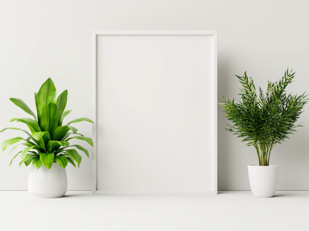 Two house plants on a ledge with a white background